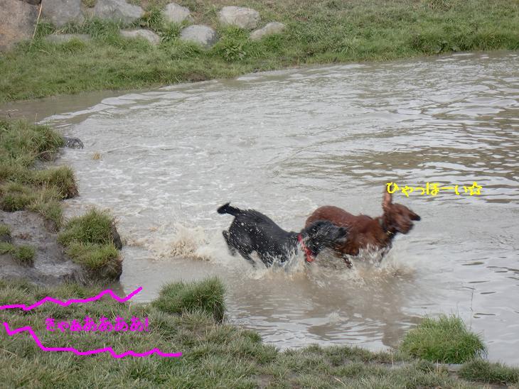 f:id:coppa06:20100320120651j:image
