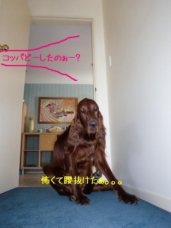 f:id:coppa06:20100322133538j:image