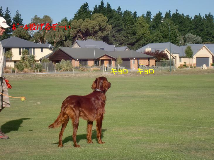 f:id:coppa06:20100326132337j:image