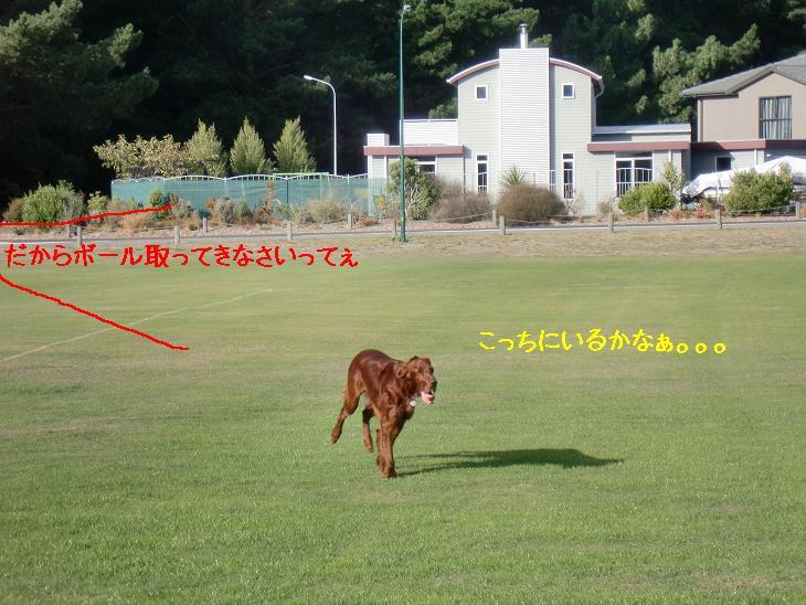 f:id:coppa06:20100326132537j:image