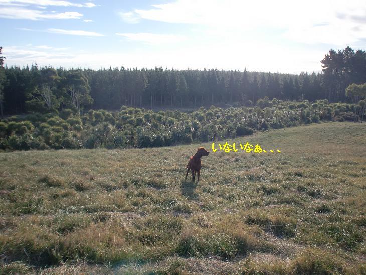 f:id:coppa06:20100326134036j:image