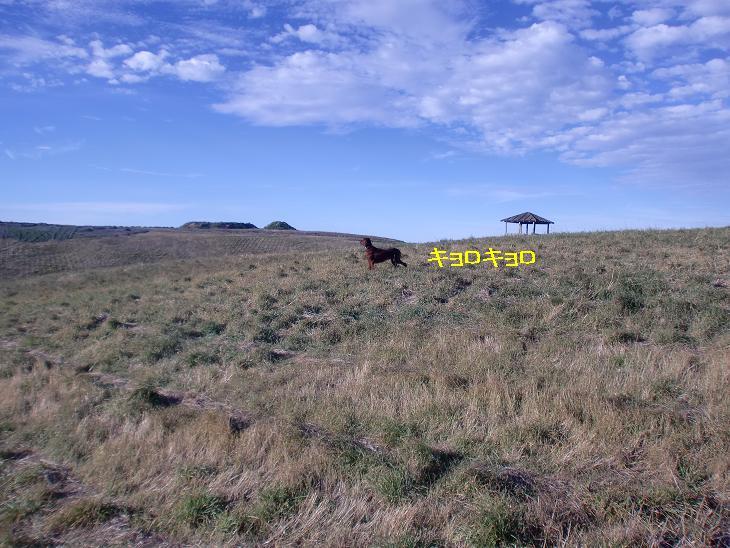 f:id:coppa06:20100326134201j:image