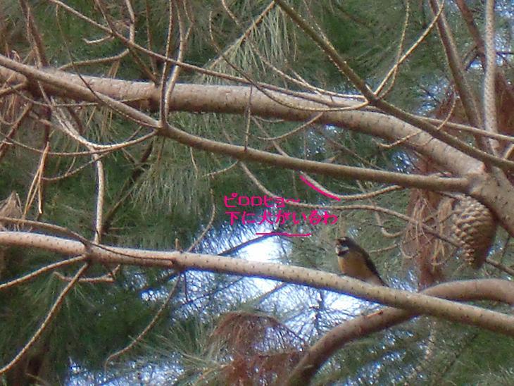 f:id:coppa06:20100329090257j:image