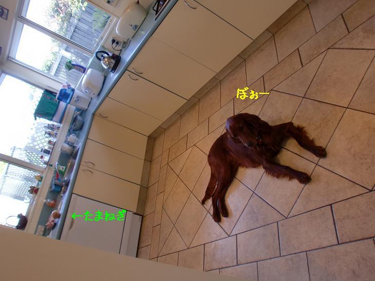 f:id:coppa06:20100330131809j:image