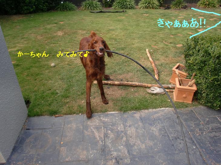 f:id:coppa06:20100402091751j:image