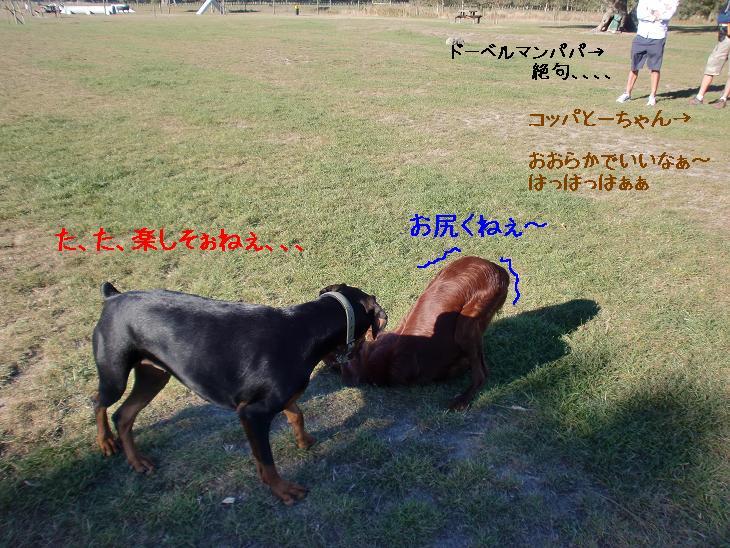 f:id:coppa06:20100409121906j:image