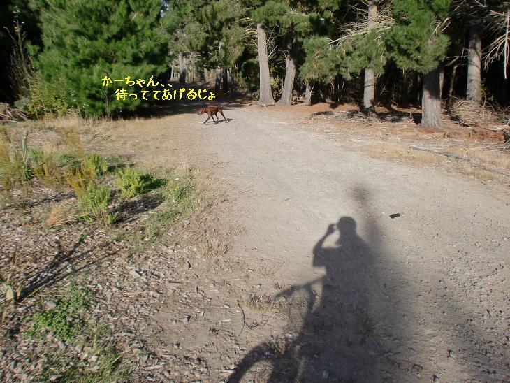 f:id:coppa06:20100412130839j:image