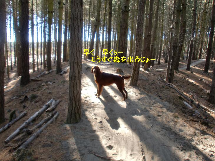 f:id:coppa06:20100423083357j:image