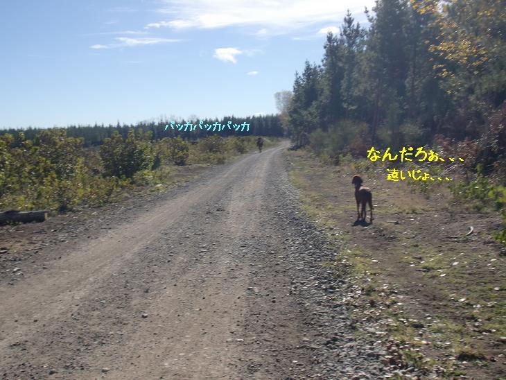 f:id:coppa06:20100423083726j:image
