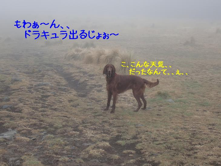 f:id:coppa06:20100424082446j:image