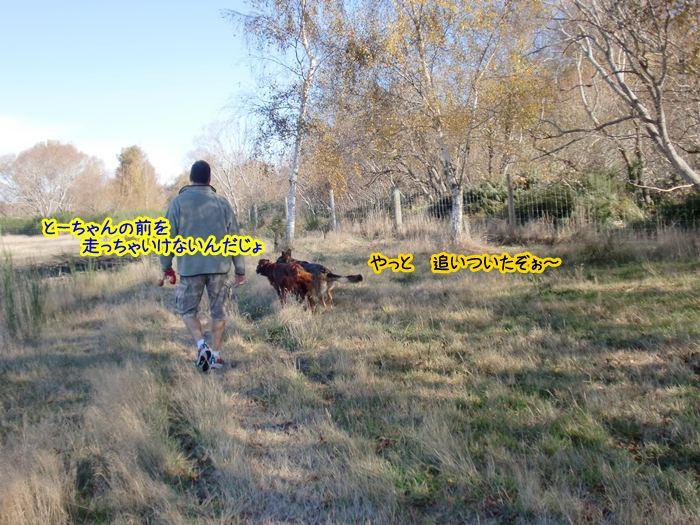 f:id:coppa06:20100515110142j:image