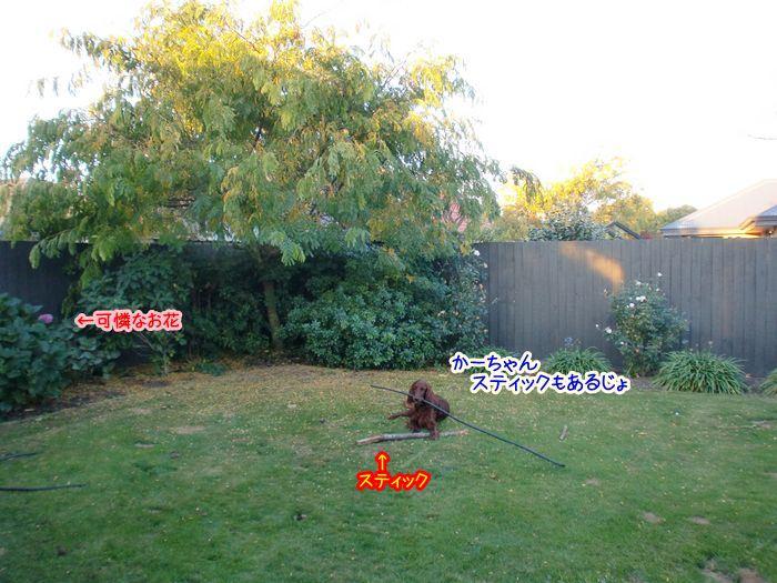 f:id:coppa06:20100528153749j:image
