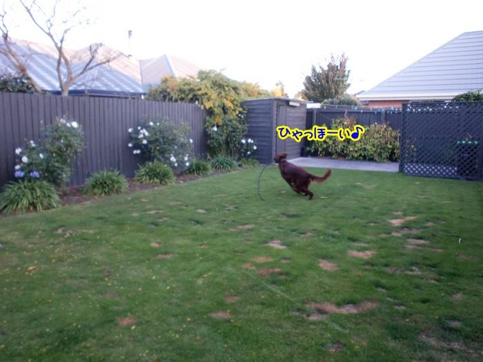 f:id:coppa06:20100528153751j:image
