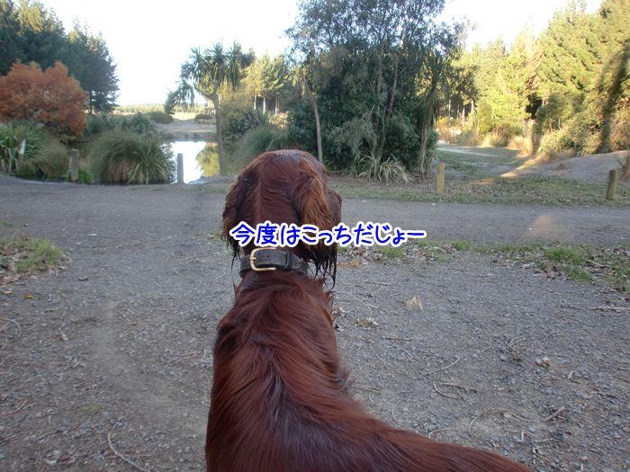f:id:coppa06:20100529174917j:image