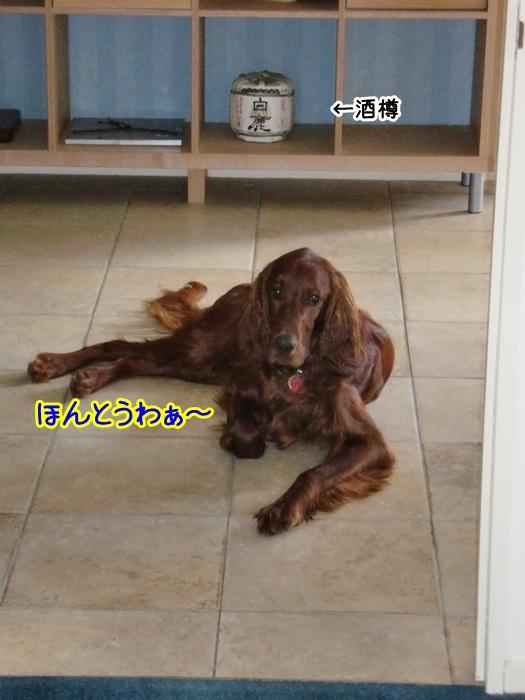 f:id:coppa06:20100531210414j:image