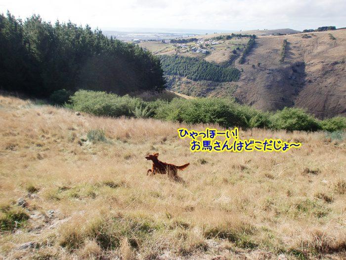 f:id:coppa06:20100602171607j:image