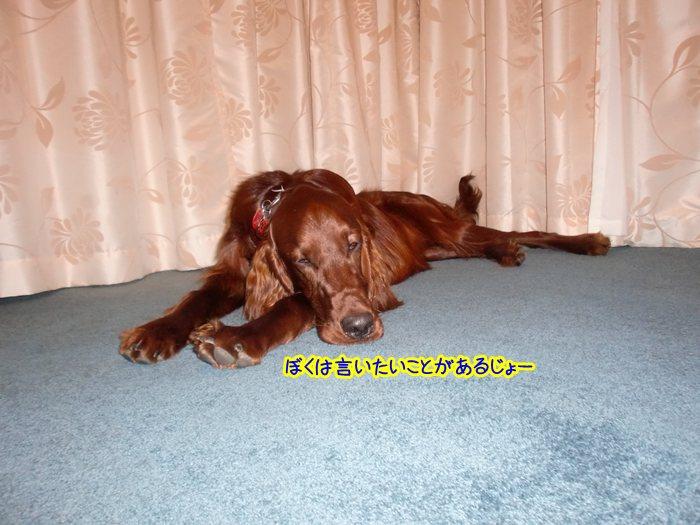 f:id:coppa06:20100609183824j:image
