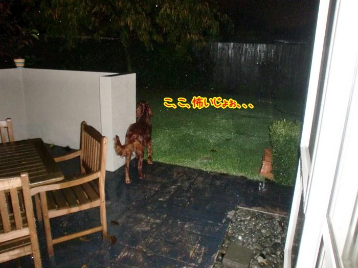 f:id:coppa06:20100610182715j:image