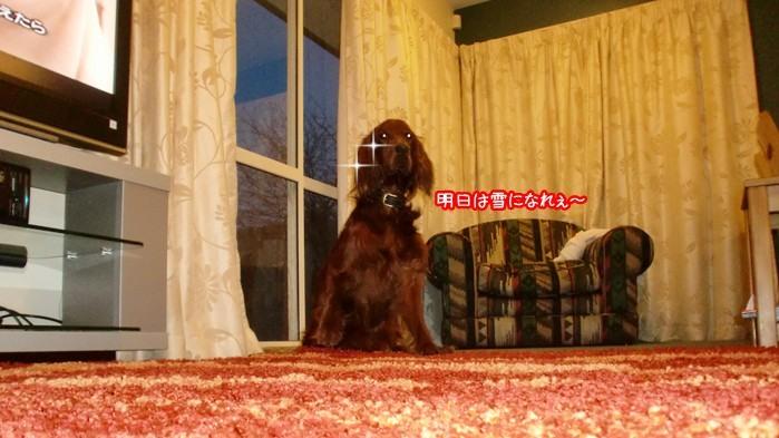 f:id:coppa06:20100807152138j:image