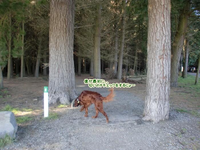 f:id:coppa06:20110905151619j:image