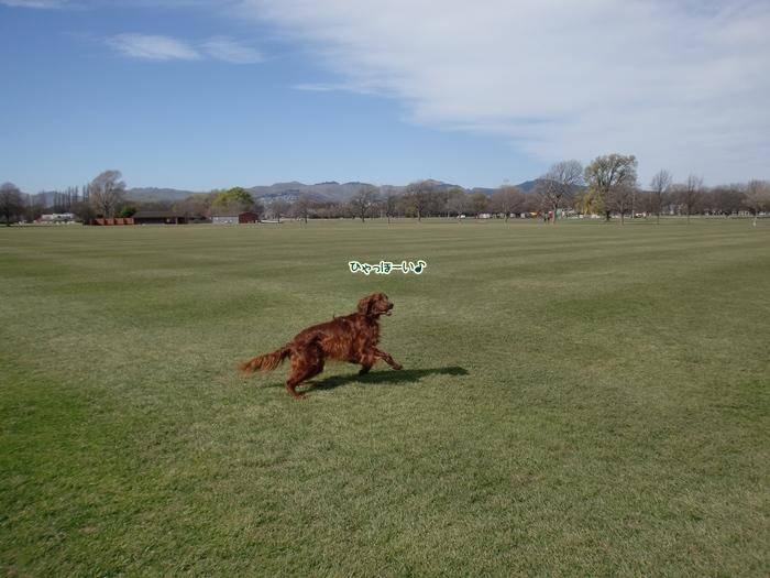 f:id:coppa06:20111101155814j:image