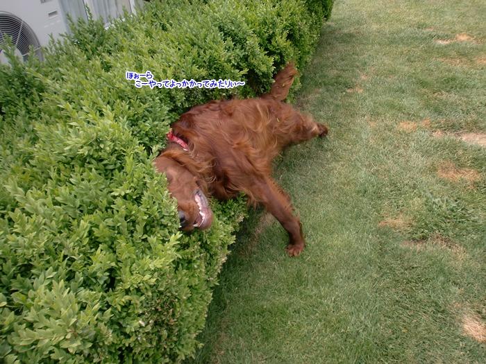 f:id:coppa06:20111207135656j:image