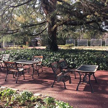 京都植物園内 木の下のテーブルと椅子