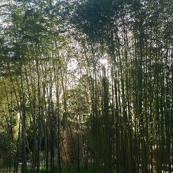 京都府立植物園の竹林 3月下旬