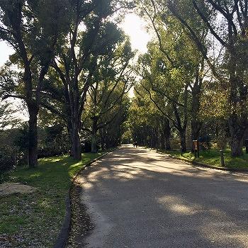 京都府立植物園内の大きな木と道 3月下旬の午後
