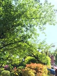 京都市蹴上浄水場の新緑