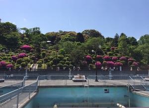 京都市蹴上浄水場の一般公開 つつじ