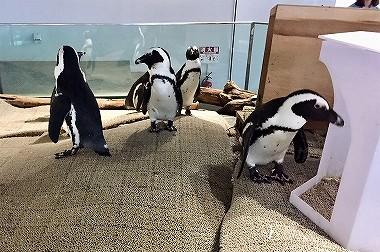 ニフレルのペンギン