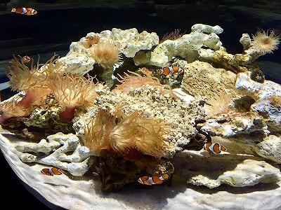 ニフレルの水槽で泳ぐ熱帯魚