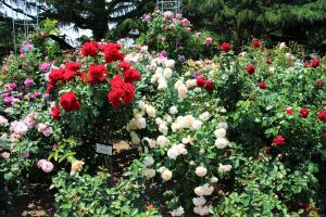 京都府立植物園 ばら園の景色