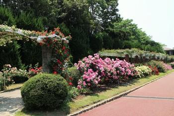 京都府立植物園 薔薇のアーチ