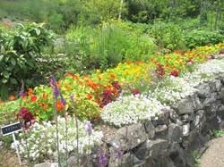 ガーデンミュージアム比叡「香りの庭」の花