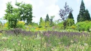 ガーデンミュージアム比叡「香りの庭」