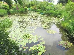 睡蓮の庭の池