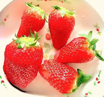 道の駅 神戸フルーツフラワーパークで買った苺(いちご) 甘くて美味