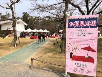 二条城 桜まつりのお花見広場