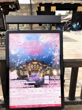 二条城 桜まつり 夜間観覧コース 見どころ案内