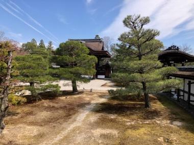 仁和寺 御殿の庭