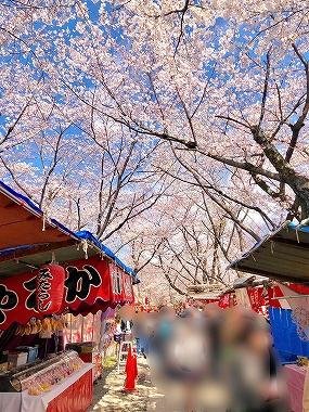京都 平野神社の桜と屋台