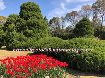 京都府立植物園 チューリップ 赤いチューリップの咲く庭