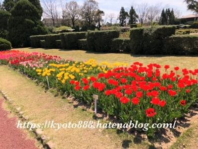 京都府立植物園 チューリップの花壇 赤・黄・ピンクの花
