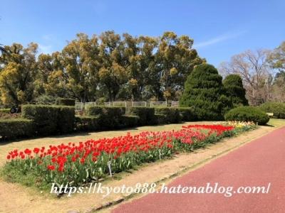 京都府立植物園 チューリップの花壇 赤い花