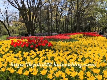 京都府立植物園 チューリップ畑 赤と黄色