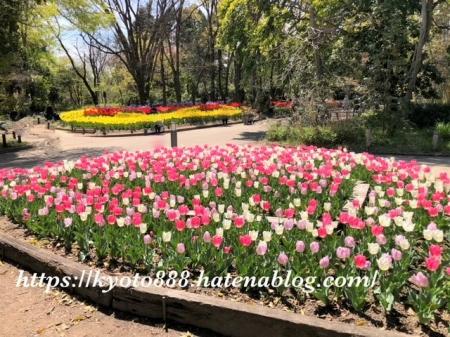 京都府立植物園 チューリップ畑