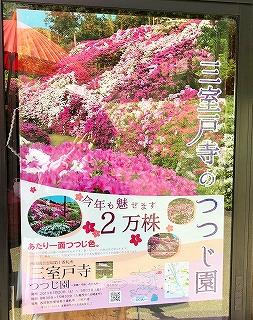 三室戸寺 つつじ園のポスター