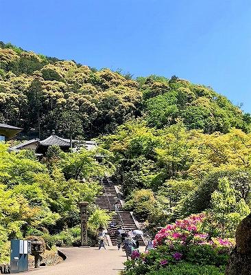 三室戸寺の本堂へ続く階段
